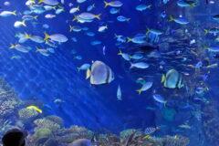 Unterwasser- Ihr Aquarium an der Wand