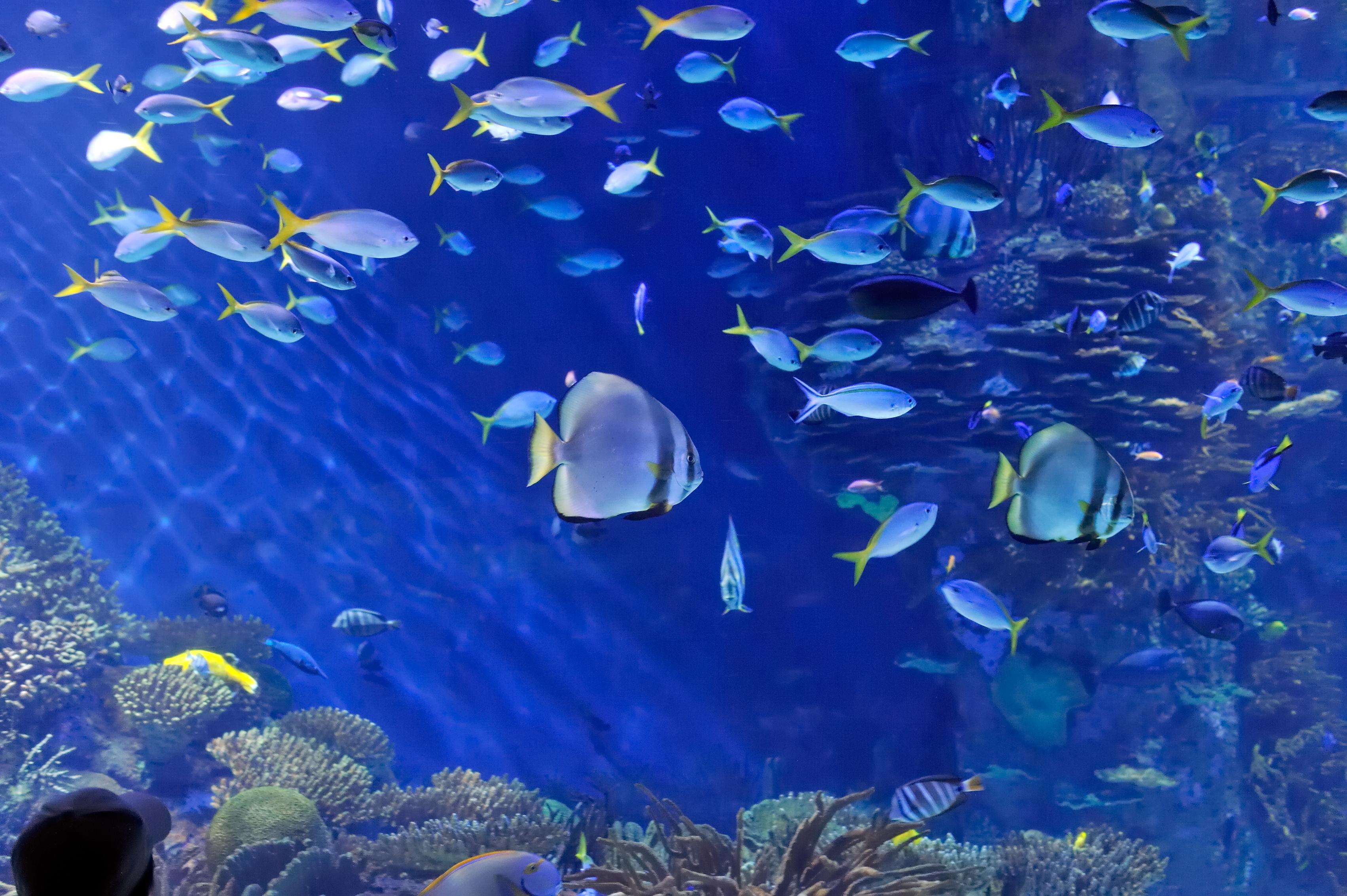 unterwasser ihr aquarium an der wand drnice. Black Bedroom Furniture Sets. Home Design Ideas