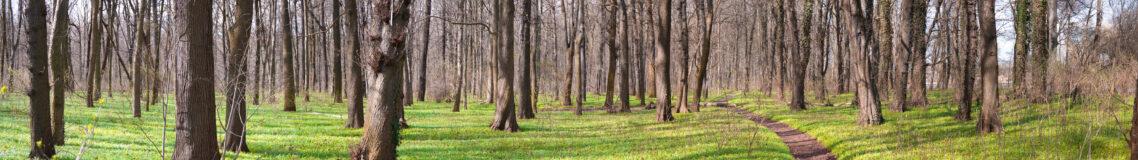 Weg durch Plänterwald Frühling für Ihre Wände
