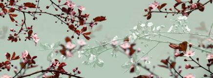 Kirschblütenzweige (Wandbild)