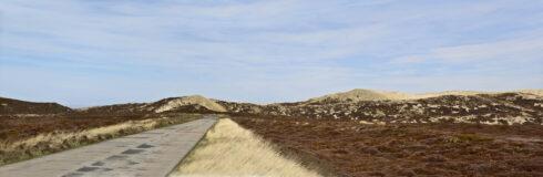 Sylt Landschaft – Wandmotive mit Kultcharakter