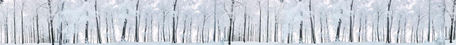 Winterwald xxxl – verschneiter Buchenwald